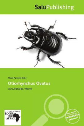 Otiorhynchus Ovatus