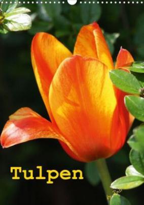 Tulpen (Posterbuch DIN A4 hoch)